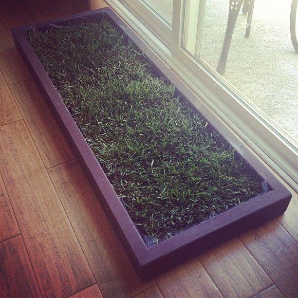 Best Indoor Grass For Dogs Images On Pinterest Doggies Pets - Indoor dog bathroom solutions