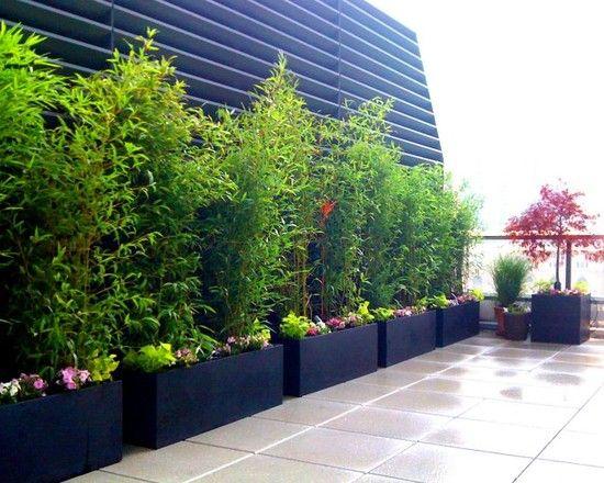 bambus pflanzen schwarze kübeln reihe terrasse balkon