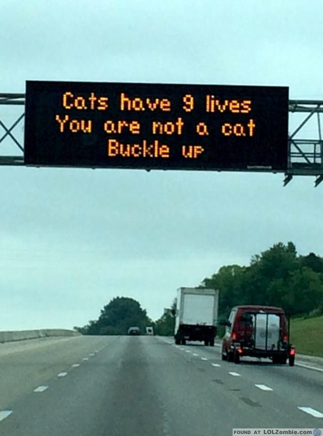 Cat's have 9 lives. You are not a cat. Buckle Up!