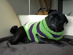 Knitting Pattern Dog Coat Pug : free Ravelry: Pug Dog Sweater pattern by Angelcatkins (Elizabeth Watkins) Des...