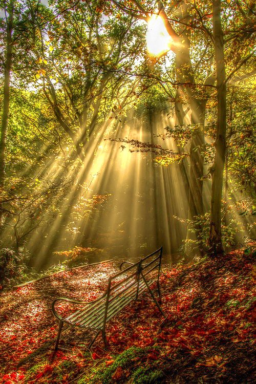 Feel the sun streaming down onto you through the beautiful trees and smelling the lovely scent of all the autumn leaves.