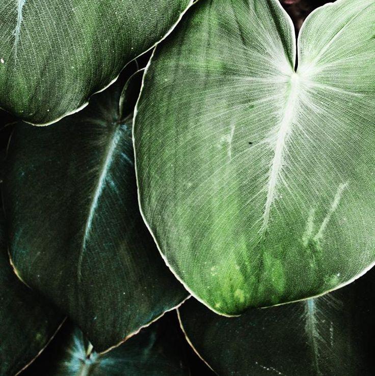 die besten 25 jade pflanzen ideen auf pinterest saftige pflege zimmerpflanzen und zimmer. Black Bedroom Furniture Sets. Home Design Ideas