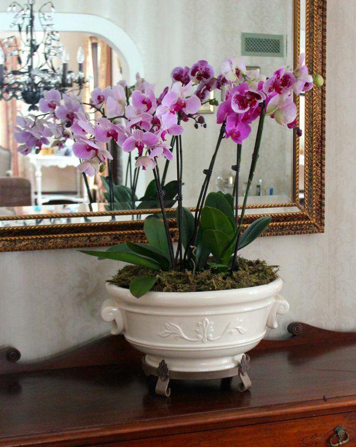 the 25+ best fleur d intérieur ideas on pinterest   plante d