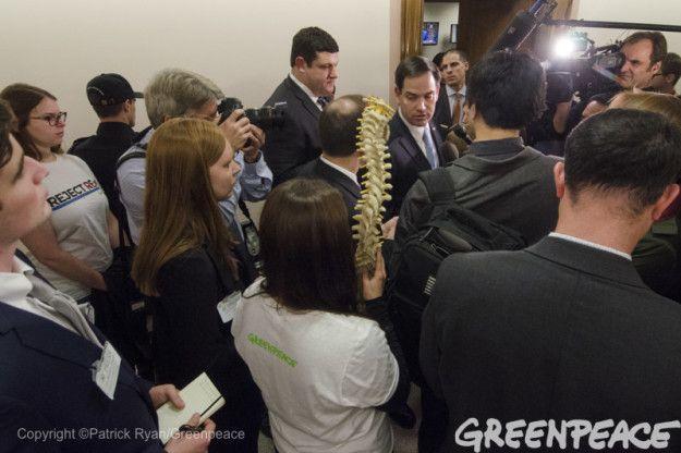 Greenpeace told BuzzFeed News that on Monday one of their climate campaigners, Naomi Ages, carried �the spine [Rubio] must have left at home.� | Greenpeace Literally Brought Marco Rubio A Spine To Mock His Vote For Rex Tillerson - BuzzFeed News