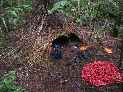 Bower Birds create art outside their nests to attract females.