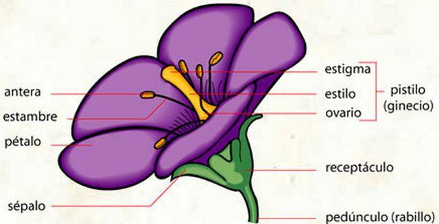 Resultado De Imagen Para La Flor Con Sus Partes Ciencias De La Vida Partes De La Planta Partes De La Misa