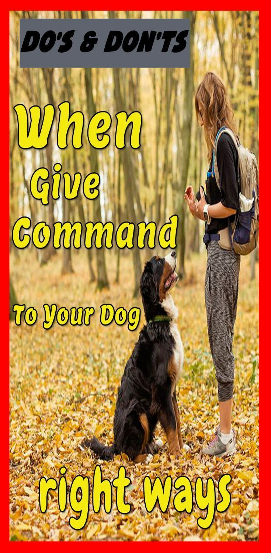 Best Obedience Training Dogtraininglife Dogtraininghacks Puppy