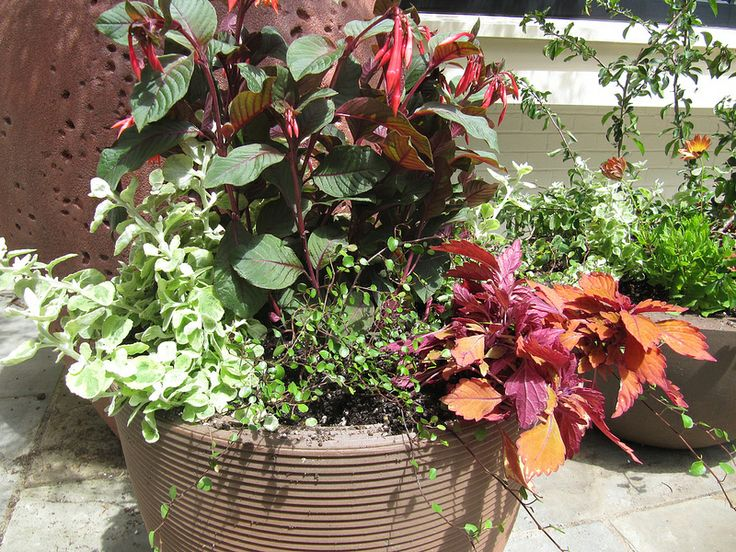 spring summer pot by Pruning by Design