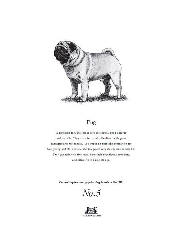 Pug Tea Towel  The Kennel Club Official Shop
