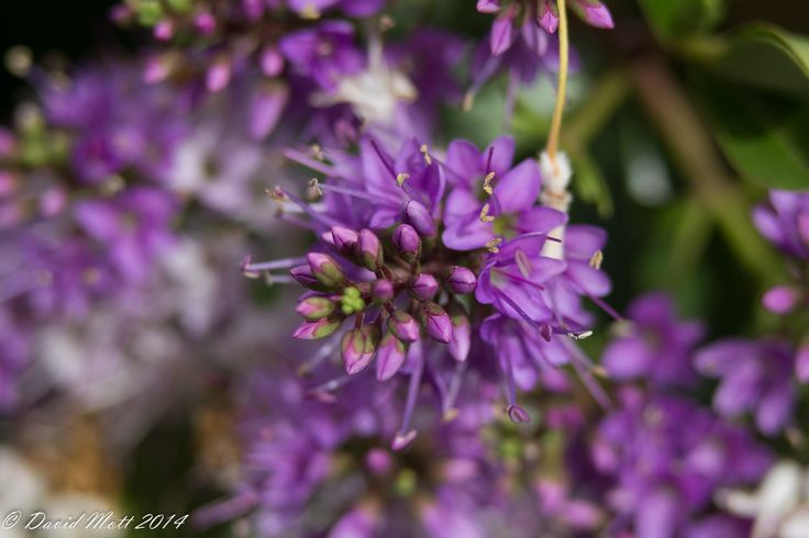 Canon 1200d. 75-300mm lens at 75m. f4.5, 1/1000sec, ISO500. Hand held with 31mm extension tube.