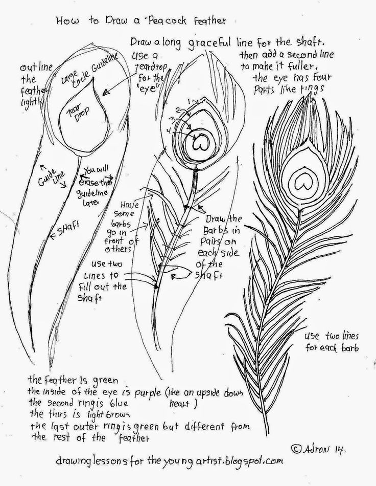 How to draw a peacock feather. See more at my blog: http://drawinglessonsfortheyoungartist.blogspot.com/