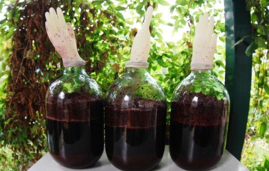 Рецепты домашнего вина из винограда с перчаткой, секреты выбора