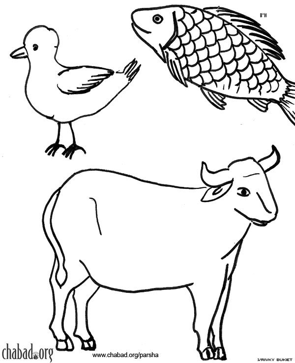 find this pin and more on judaism the early middle east shemini coloring pages