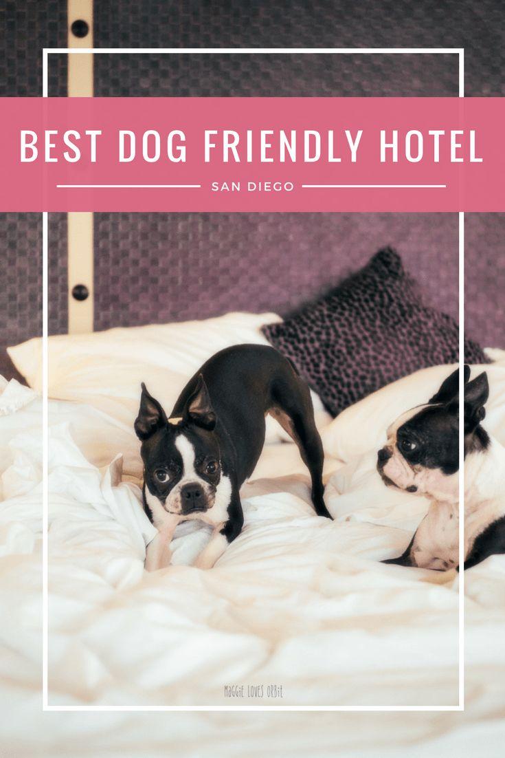 Best Dog Friendly Hotel San Diego Gaslamp Downtown