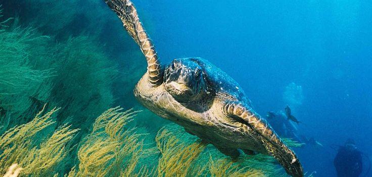 Swim with Galapagos Wildlife