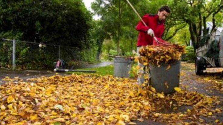 Leaf Removal Leaf Cleanup And Cost In Omaha Ne Price Moving Hauling Landscaping Supplies Landscaping Trees Garden Services