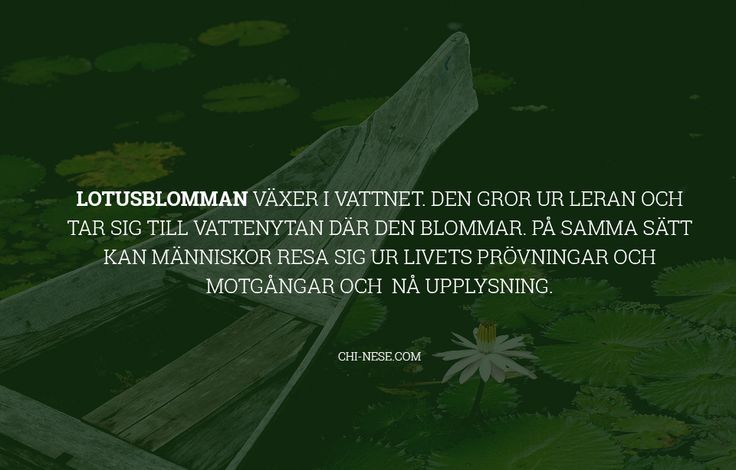 Lotusblomma citat #svenska #svenskacitat #citat