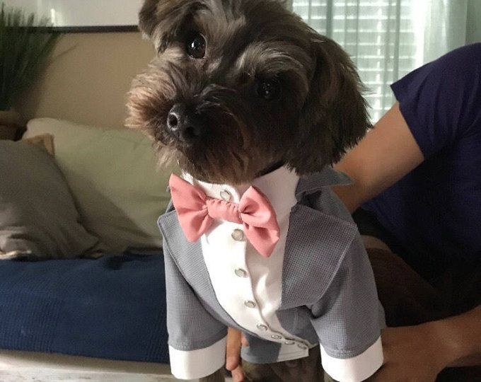 Grey dog tuxedo with pink bow tie Custom made dog wedding attire Evening dog outfit Swallow-tailed coat for dog Birthday dog costume