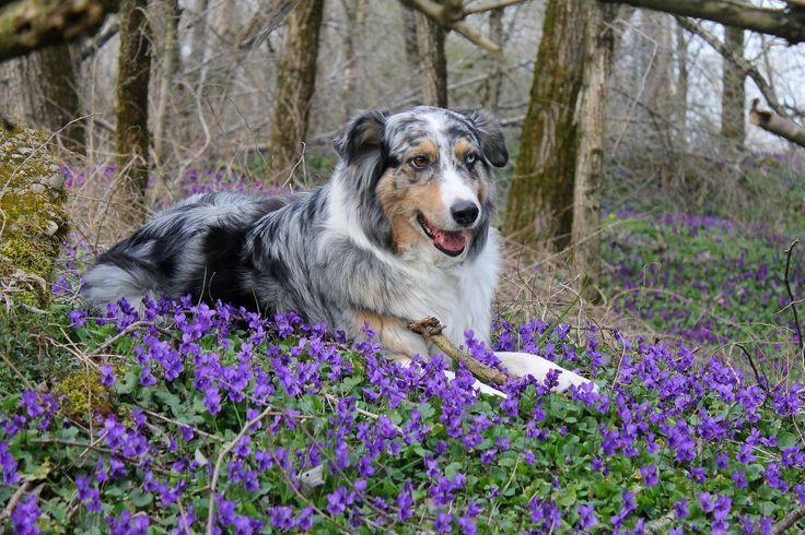 Primavera . Lea in posa tra le violette - Scuola di recitazione