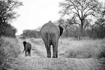 Elephant mum and baby  © www.shannonwild.com