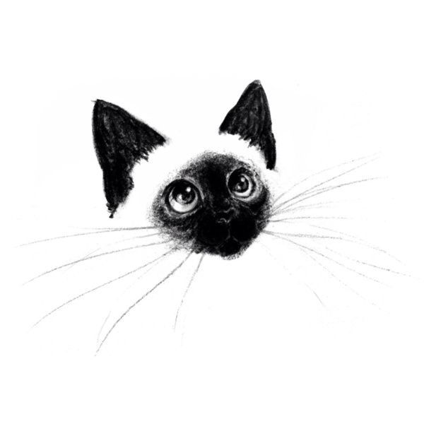 Siamese Cat Illustration