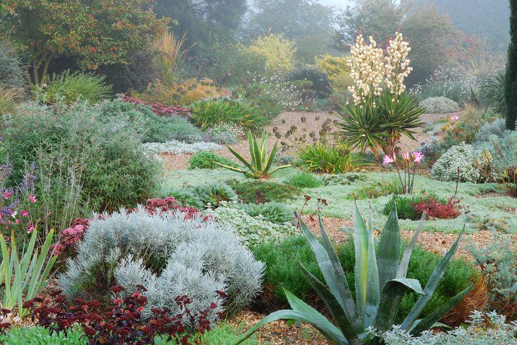 13 best dry garden planting images on Pinterest   Dry ...