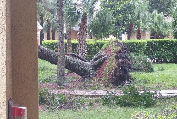 Damage in Titusville following Hurricane Matthew. (Lisa, News 13+ user)