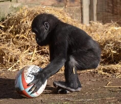 1st time we handled a #Rugby ball :)