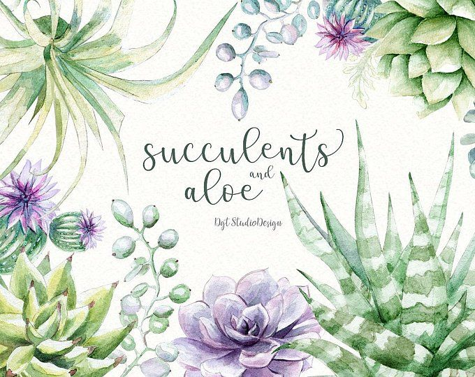 Watercolor Clipart Succulent Frame Wreath Cactus Elements Separate