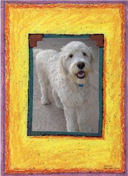 24 best love my goldendoodle images on pinterest golden doodles if you take the time to learn how the professionals groom dogs youll find youll save yourself solutioingenieria Images
