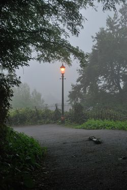 A murky morning, on the road that leads down from St. Ann's Well.