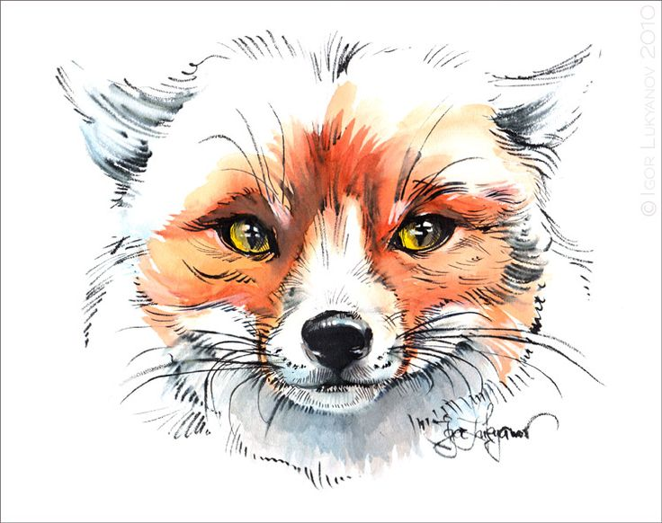 realistic sketches of a fox   Art supplies from Pentel were used to make this fox drawing