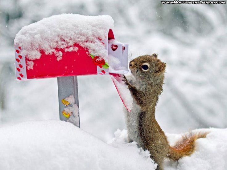 silly squirrel pictures | cute squirrel