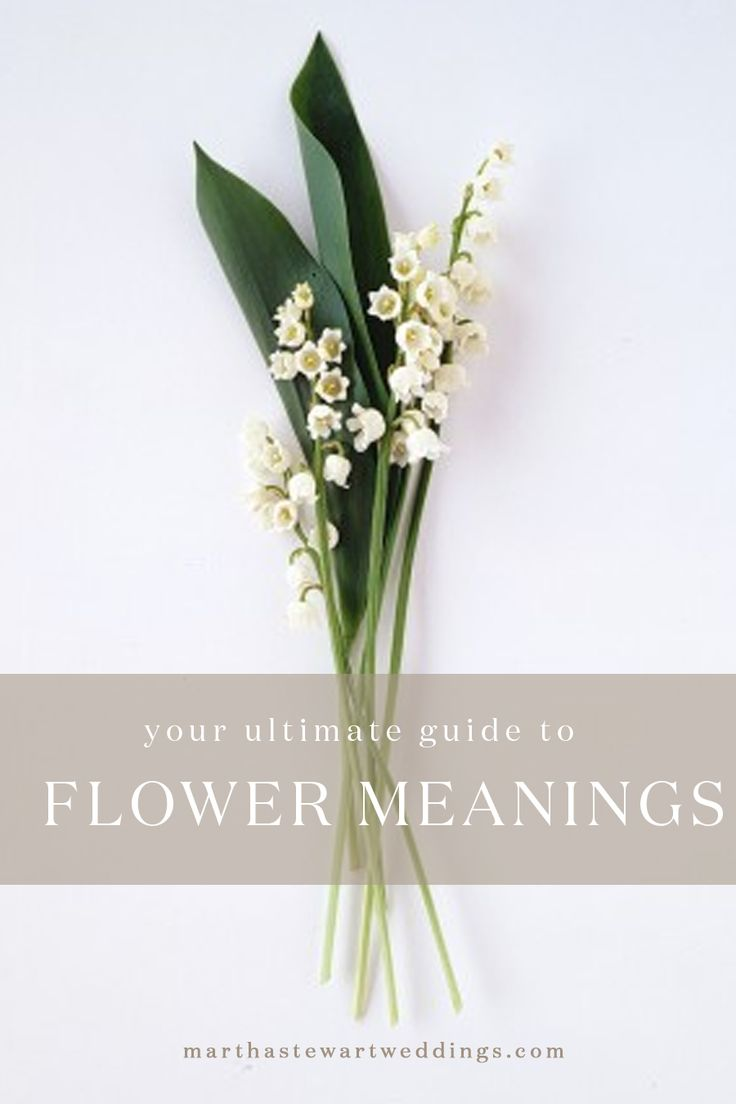 Your Ultimate Guide to Flower Meanings | Martha Stewart Weddings