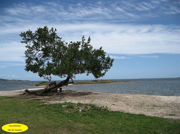 Árvore Solitária na beira da lagoa em São Pedro da Aldeia-RJ.