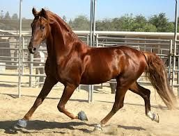 caballos pura sangre andaluces - Google Search