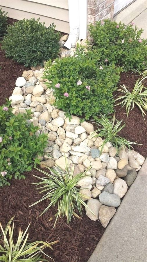 slim trees for landscaping, alliums in landscaping