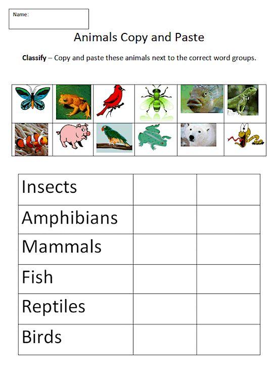 best 25 classifying animals ideas on pinterest animal classification activity animal. Black Bedroom Furniture Sets. Home Design Ideas