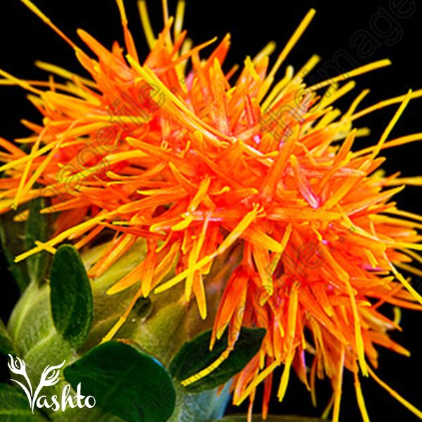 CARTHAMUS - Flower through Spring, Summer and Autumn. They can be used as a greenery in bouquets and when they sprout their orange flower, they have been known to be called a thistle on steroids.