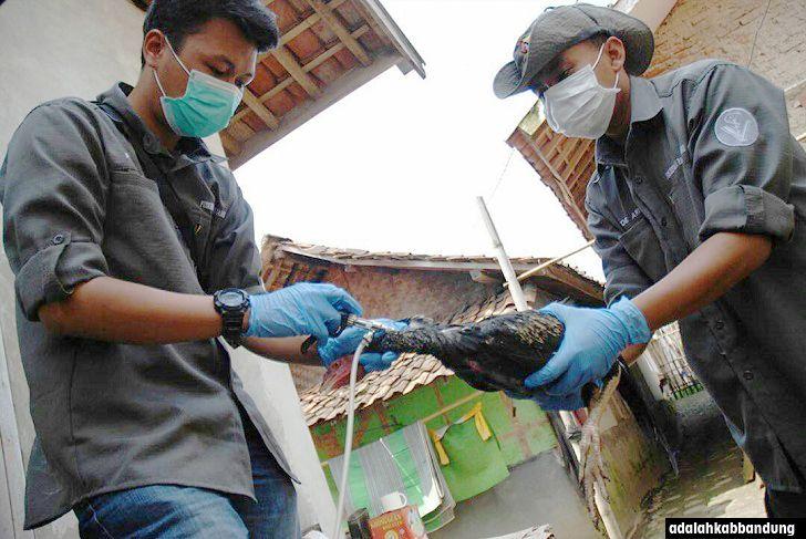 Positif Flu burung 2200 Itik Mati di Kabupaten Bandung Sepanjang Februari 2017  Positif flu burung 2200 itik mati di Kabupaten Bandung sepanjang Februari 2017 - Flu burung atau avian influenza merupakan fenomena penyakit yang terjadi pada hewan namun bisa berdampak negatif bagi manusia. Flu burung yang dikenal pula dengan istilah penyakit influensa unggas (avian influenza) atau lebih dikenal sebagai wabah flu burung berdasarkan catatan pakar kesehatan dijelaskan bahwa pertama kali terjadu…