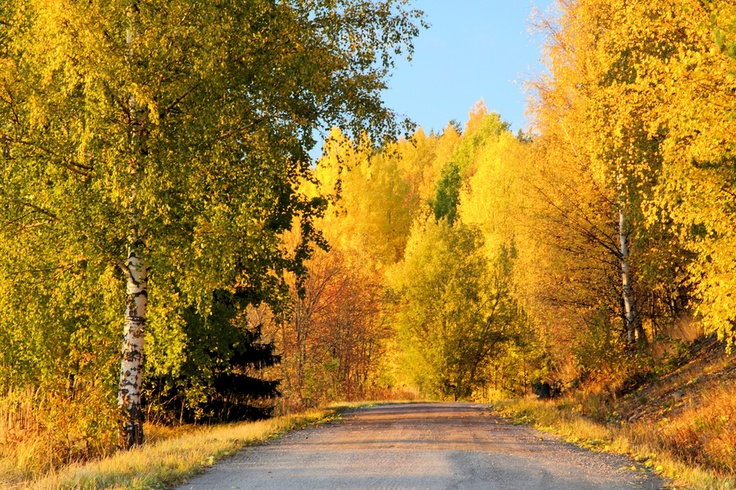 Autumn in Finland