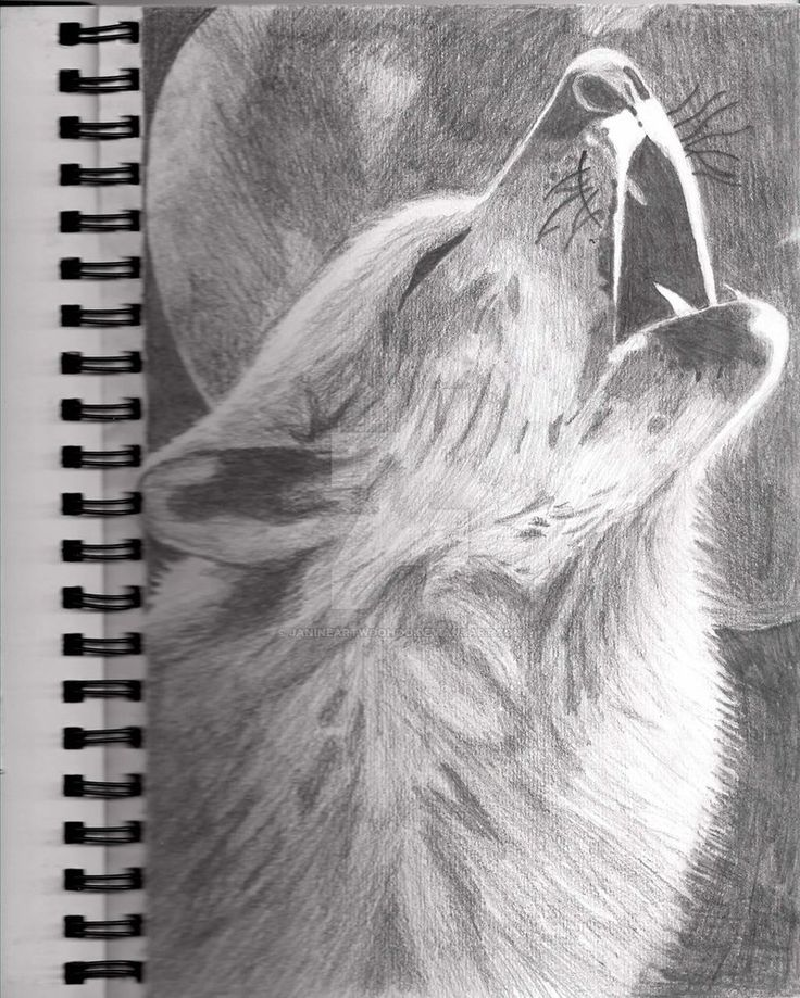 how to draw a easy wolf howling