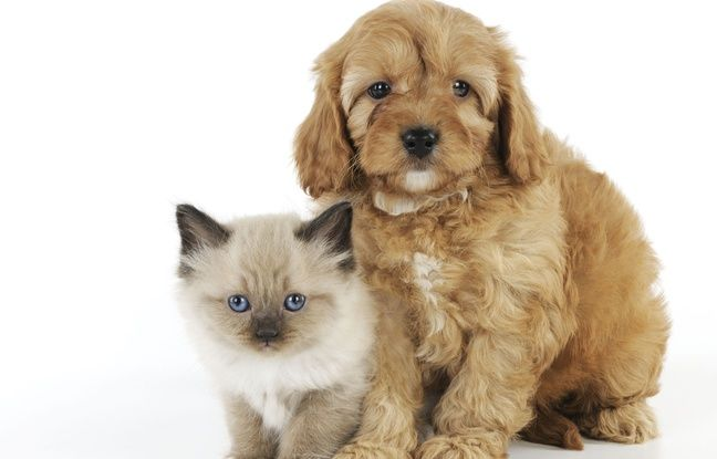 Royaume-Uni: Des entreprises accordent des congés payés en cas d'adoption d'animal