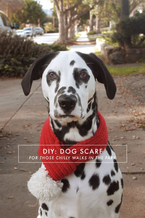 A Pair of Pears: DIY Dog Scarf (knitting pattern but the idea can be done with crochet)