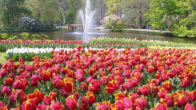 ed1265be2de7526366affdd98ab920c2 - Tours From Amsterdam To Keukenhof Gardens