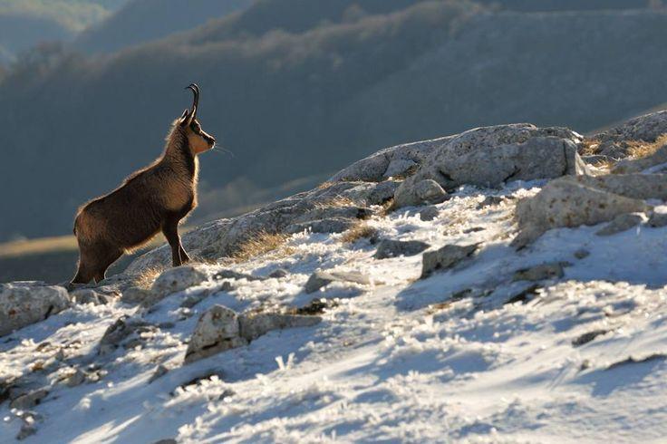Parco Nazionale D'Abruzzo Lazio e Molise uno dei parchi più belli del mondo...vieni a visitarlo....!!!!!! Noi siamo nel versante laziale con il Monte Meta 2200 mt che ci domina alle spalle....