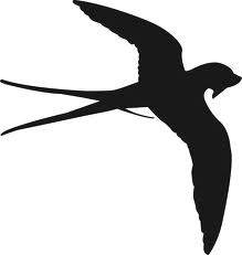 for swallow stencil?