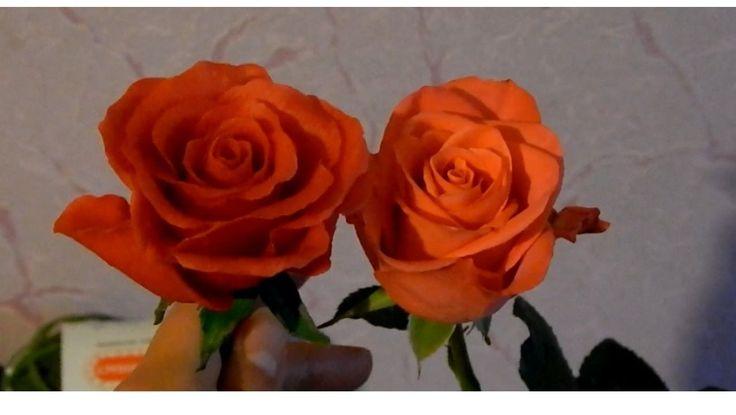 Розы из холодного фарфора мастер класс без специальных инструментов