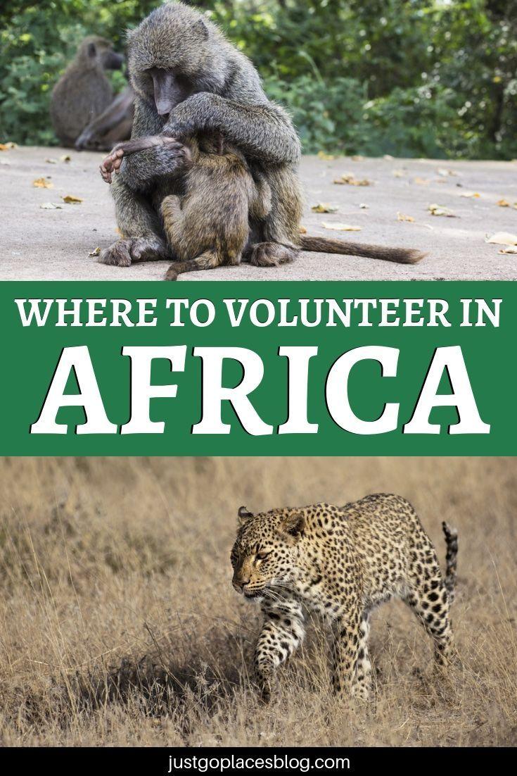 Volunteer In Africa Volunteer In Africa Volunteer Africa Animals Africa
