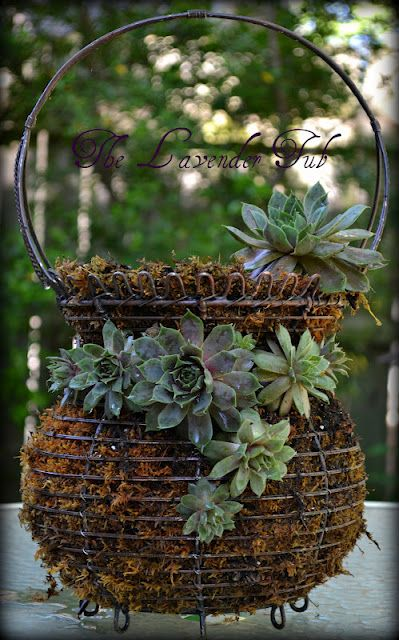 "You could use floral pins on succulents in place outside of a wire basket filled with coconut fibers in order to create an ""inside out"" planter"